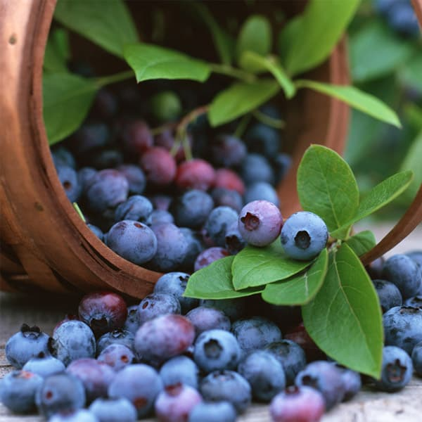 Blueberry E Liquid